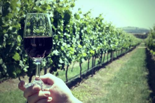 Geelong Wines