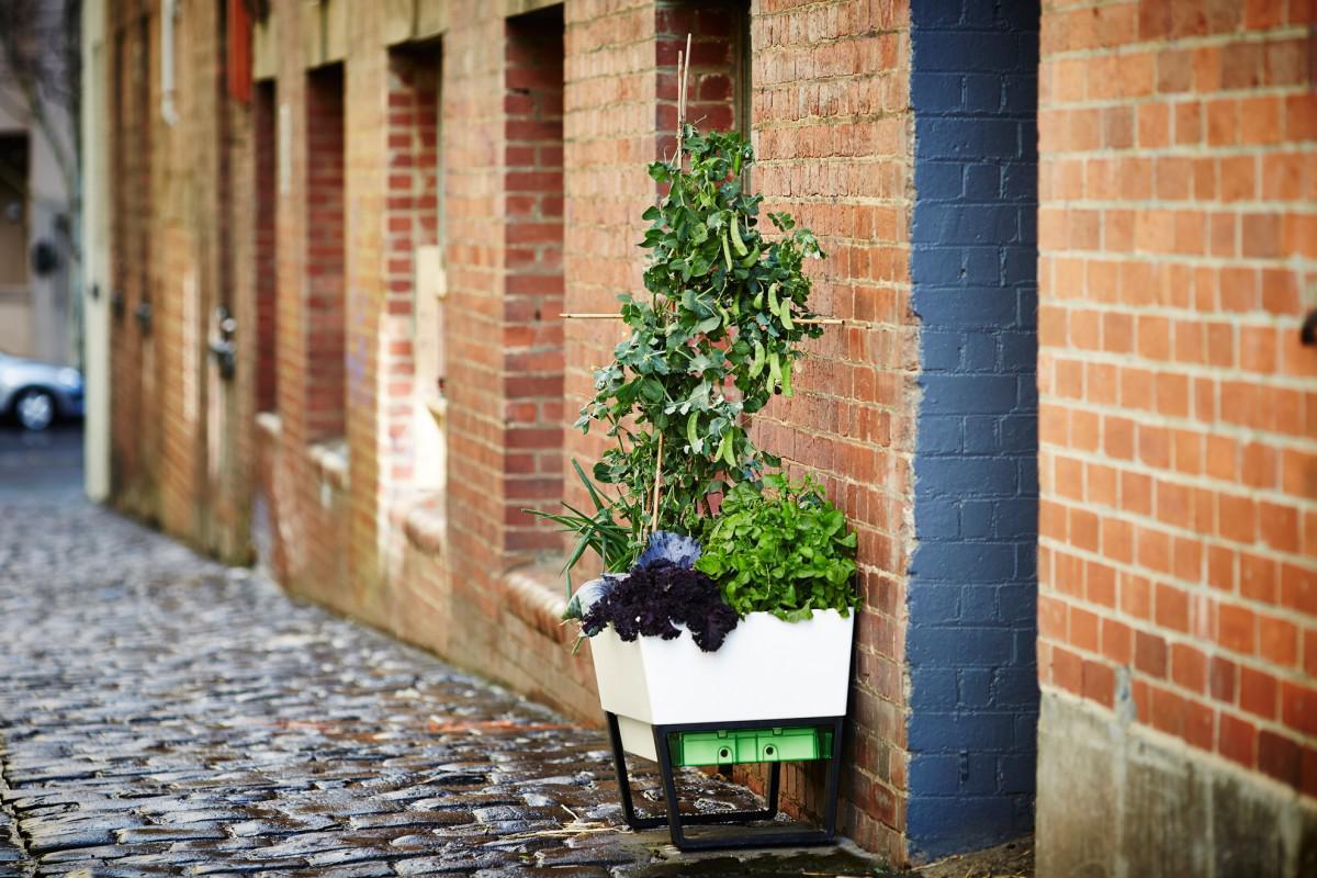 modern self watering planters